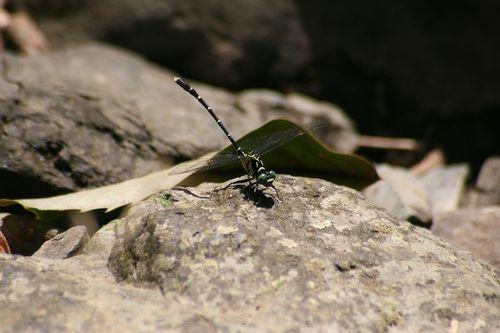 Ojirosanae318