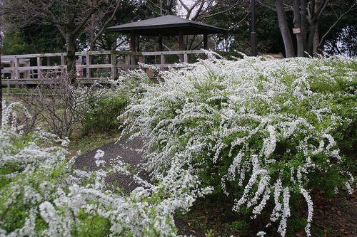 Yukiyanagi19