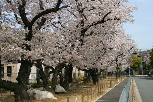 Sakura2214