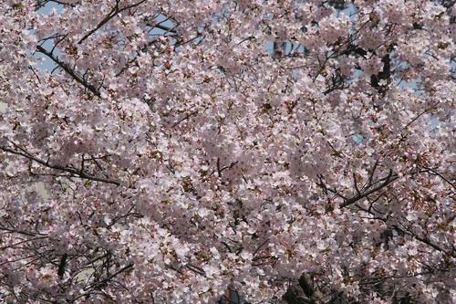 Sakura2314