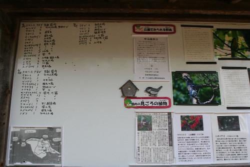 Kabutoyama1114