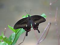Monkiageha1314