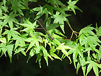Asahinakawatonbo2115