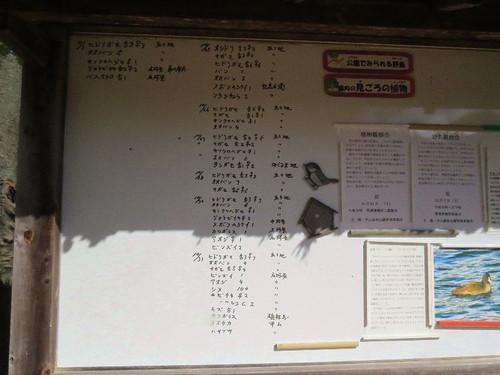 Kabutoyama4115