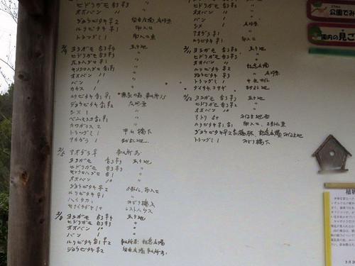 Kabutoyama1116