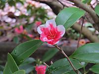 Kotyouwabisuke3116