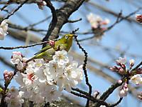 Mejiro32216_2