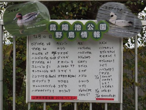 Koyaike12116_4