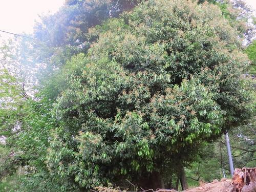 Siribukagasi91117