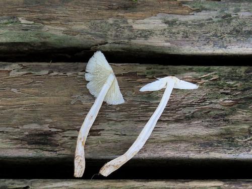 Tubukarakasatake91217